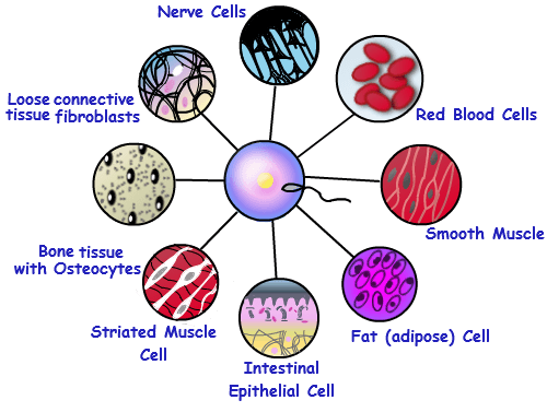 what organelle reacts to instructions for cell function