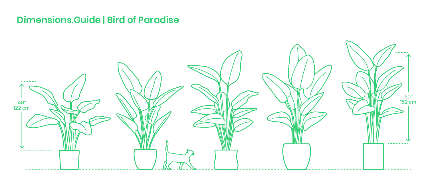 bird of paradise plant indoor care instructions