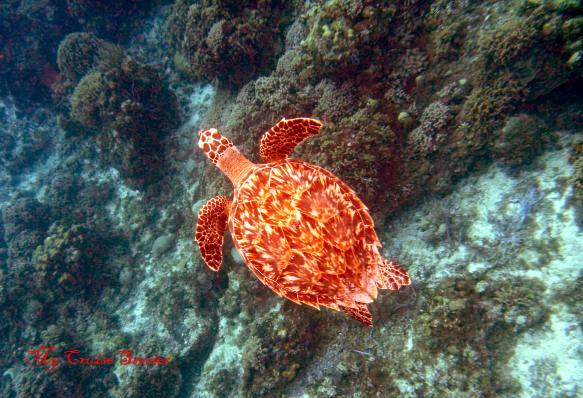lumix underwater camera instructions