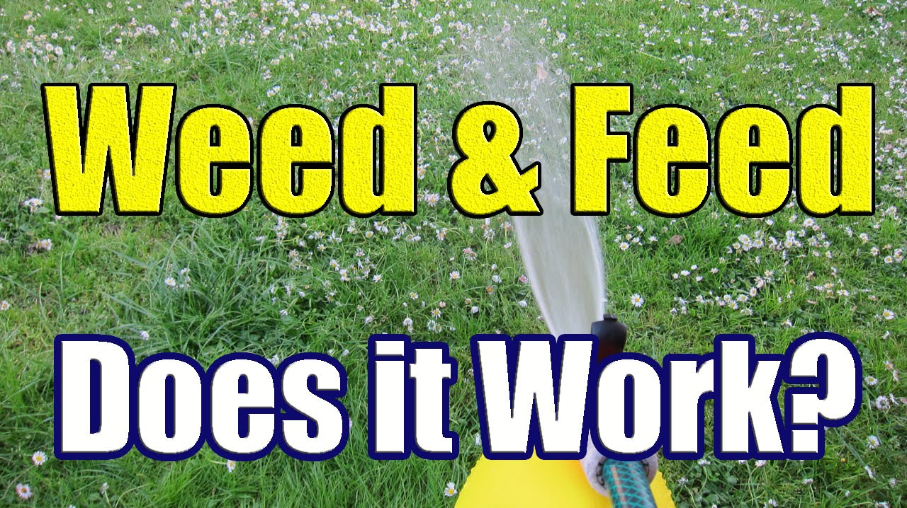 evergreen weed and feed liquid instructions