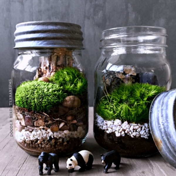 instructions for moss in a bottle